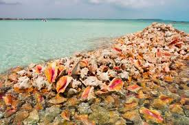 Bahamas signs agreement with IDB to advance conch conservation efforts