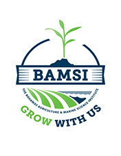 "BAMSI notes 'significant interest"" in courses"