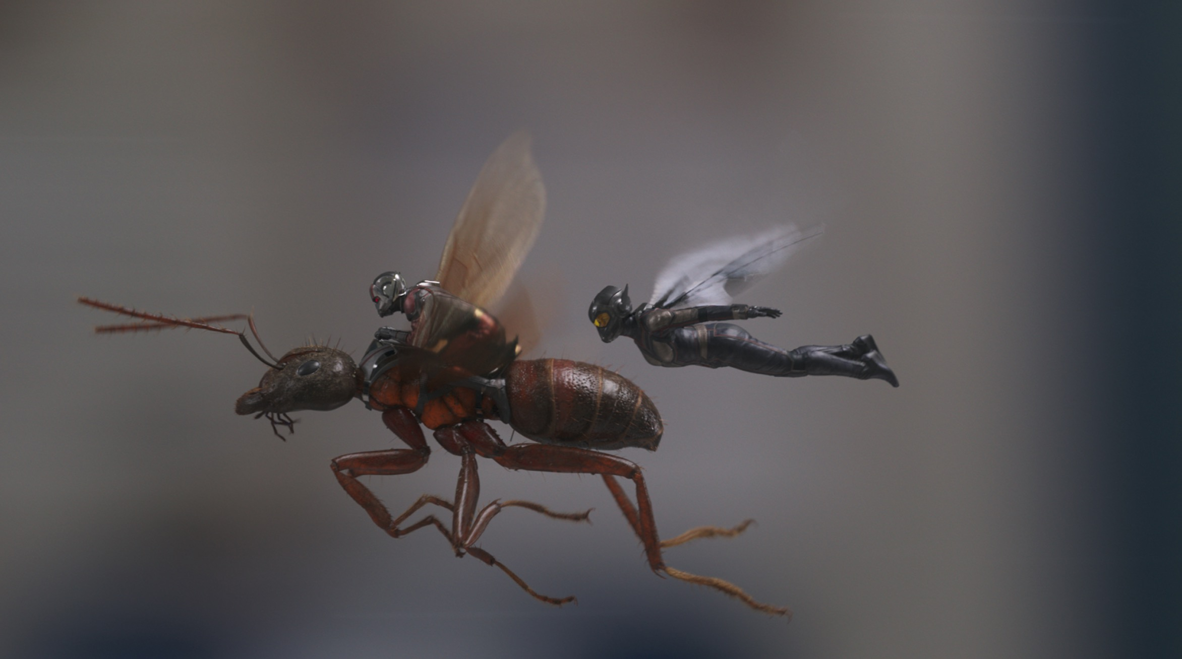 Ant-Man Wasp Marvel Comic Universe Movie