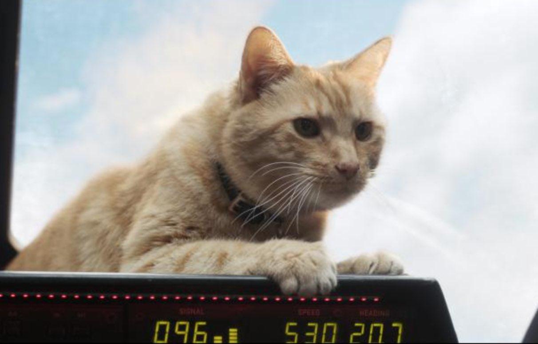 cat captain marvel