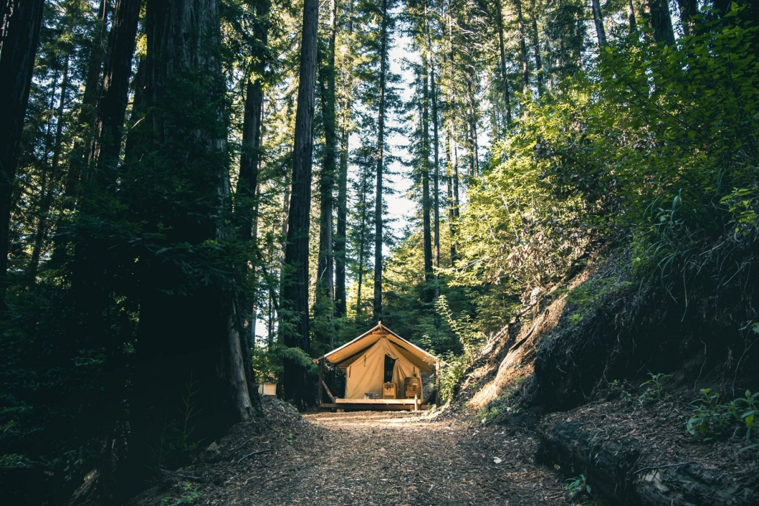 Glamping amidst trees