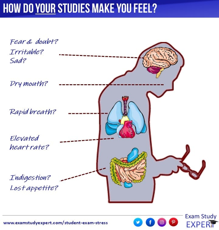 18 fresh ideas to soothe student exam stress -