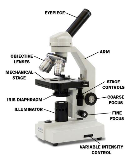 Microscope के अलग अलग पार्ट
