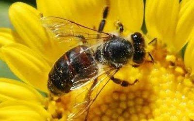 Μελισσοκομία: Εξαιρετικά κέρδη με χαμηλό κόστος επένδυσης
