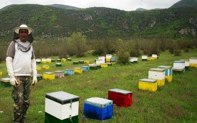 Οι μελισσοκόμοι ρωτούν