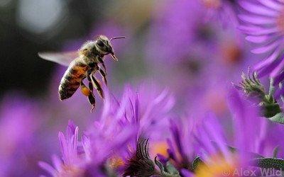 Μελισσουργικές εργασίες τον Σεπτέμβρη.
