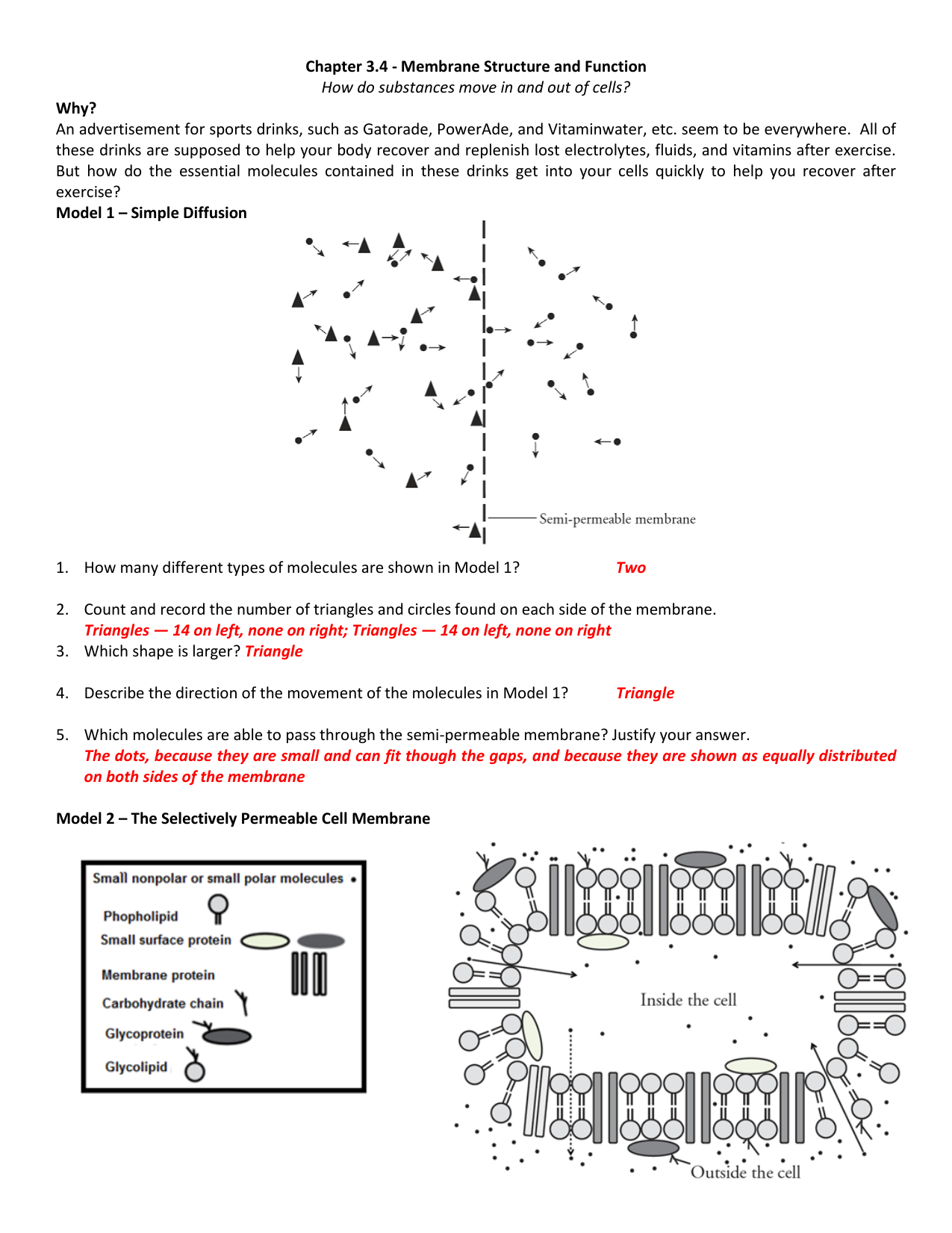 Membrane Structure And Function Worksheet