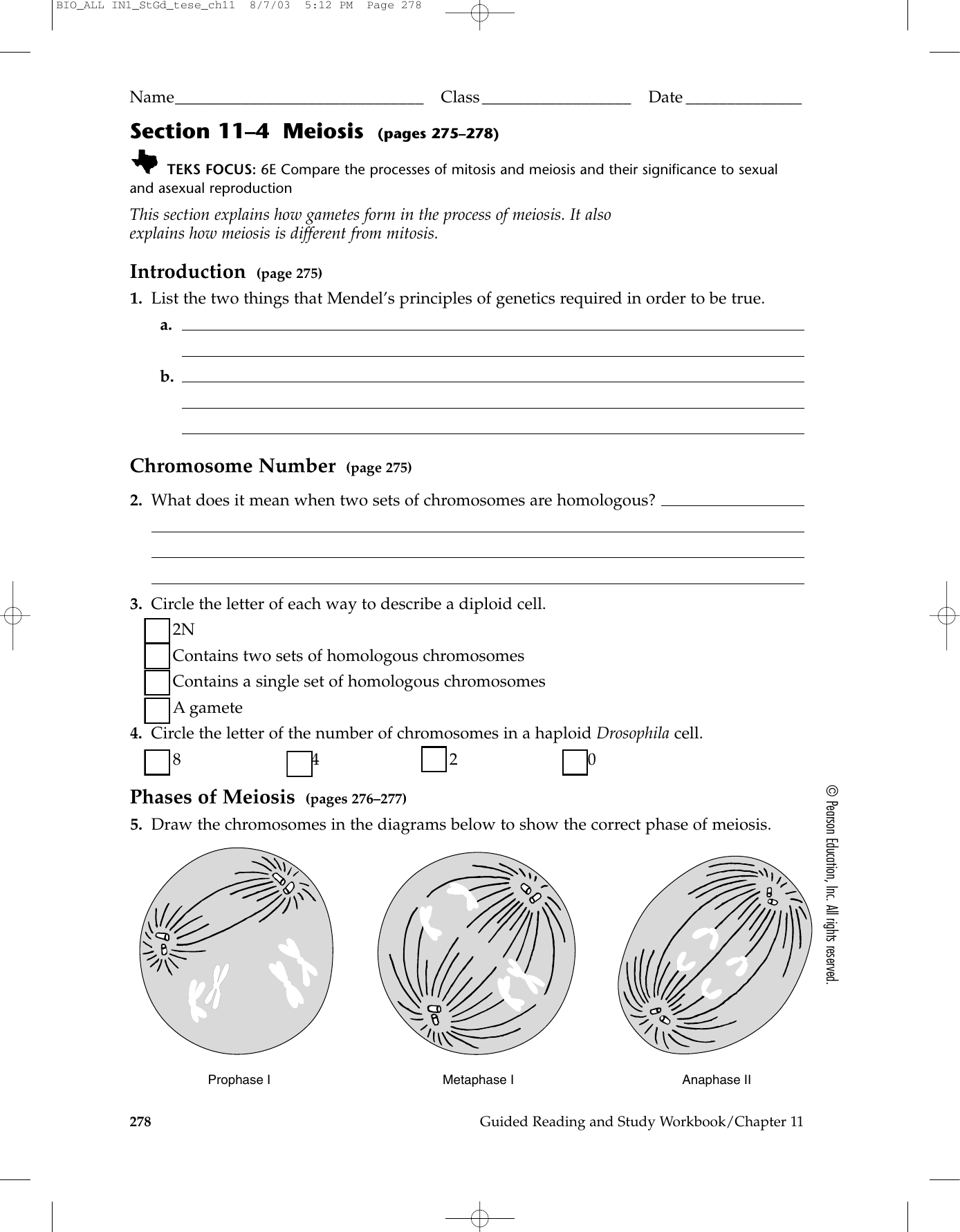 Biology Section 11 4 Meiosis Worksheet Answer Key