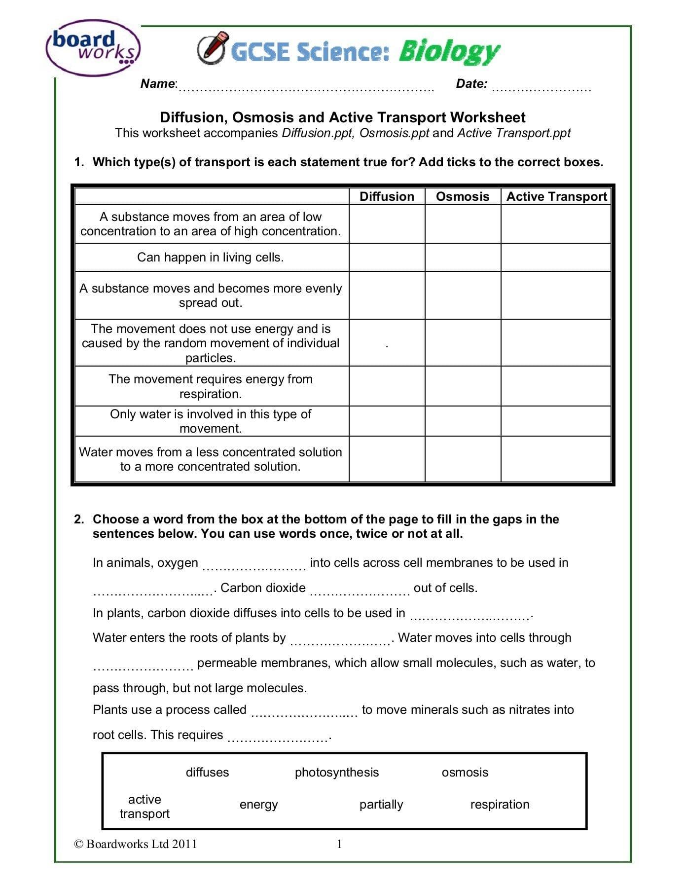 Active Transport Worksheet