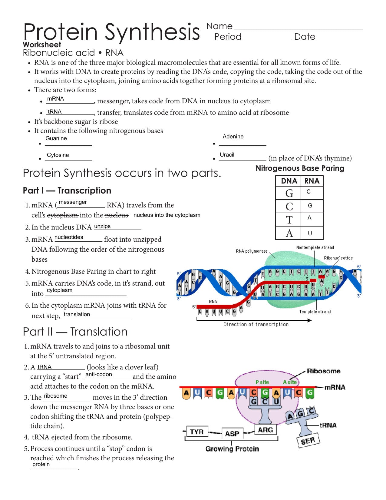 Protein Synthesis Issaquah Connect Also Dna To Rna To