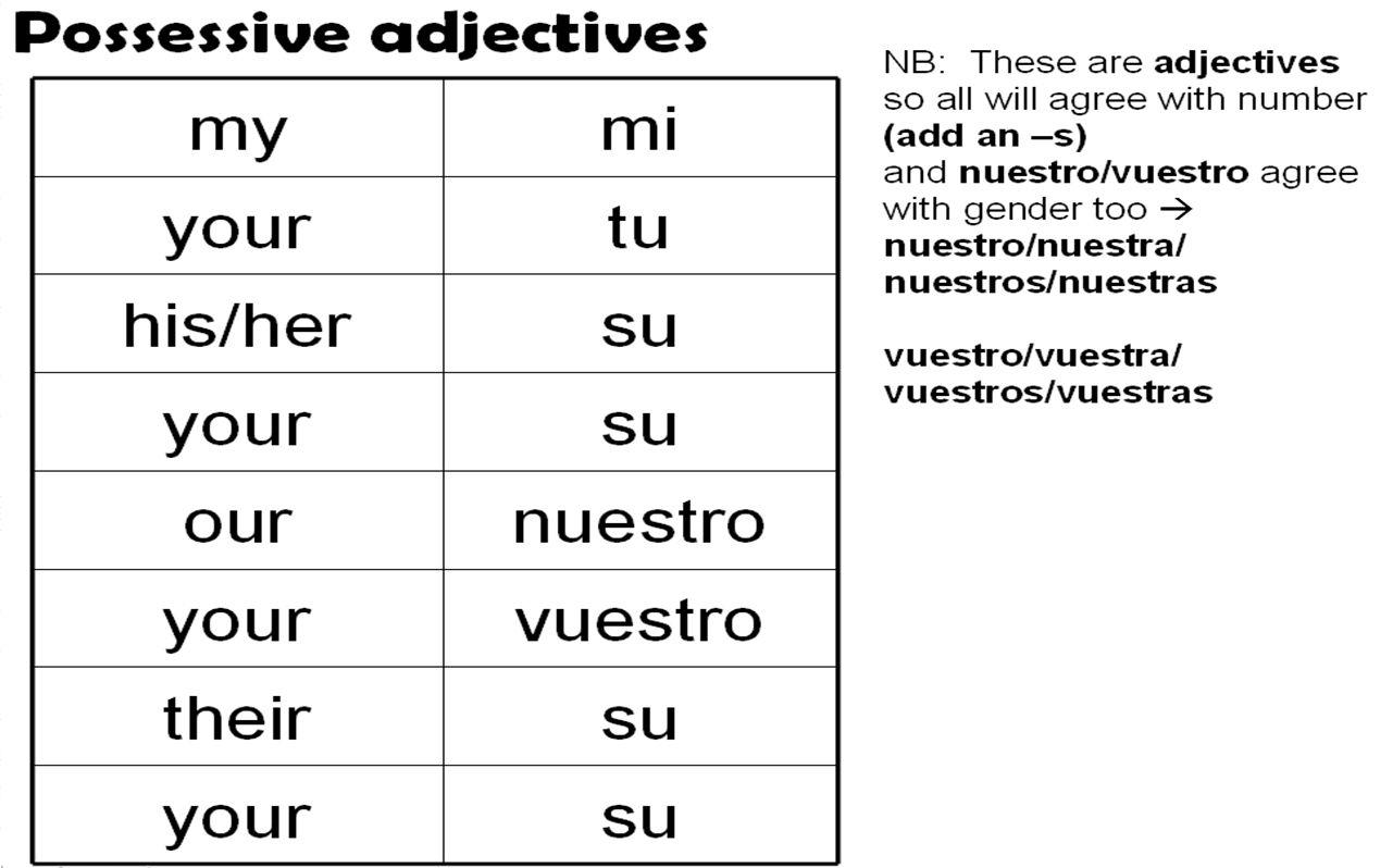 Worksheet 2 Possessive Adjectives Spanish Answers