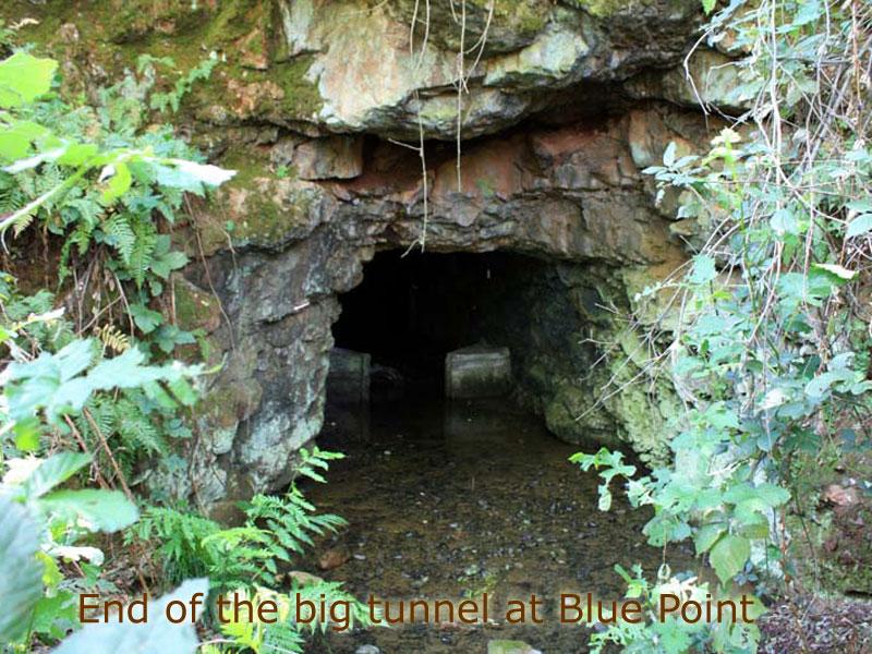 bluepoint (1)