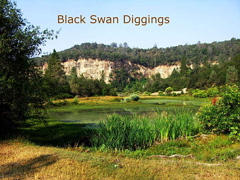 blackswandiggings (12)