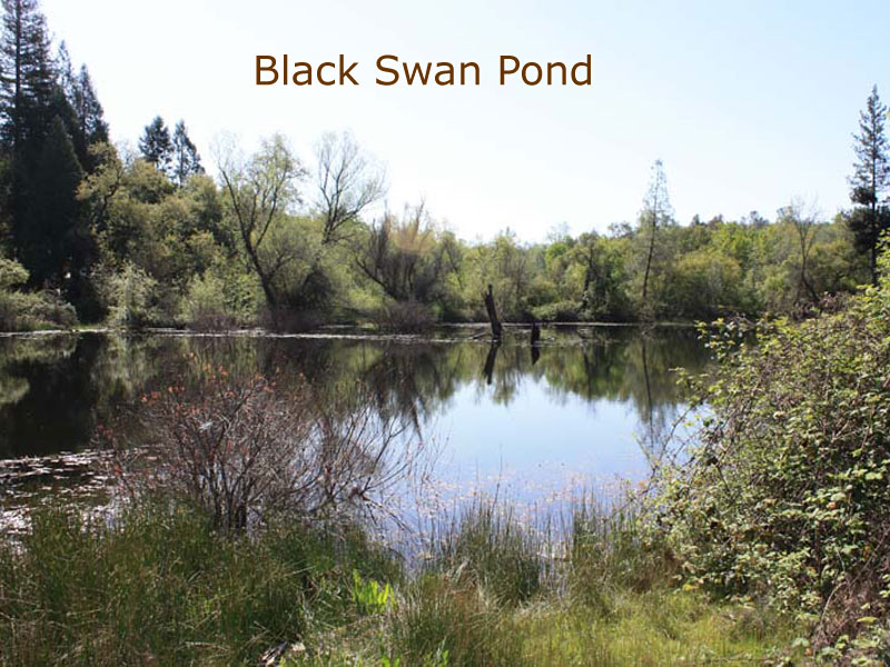 blackswandiggings (8)