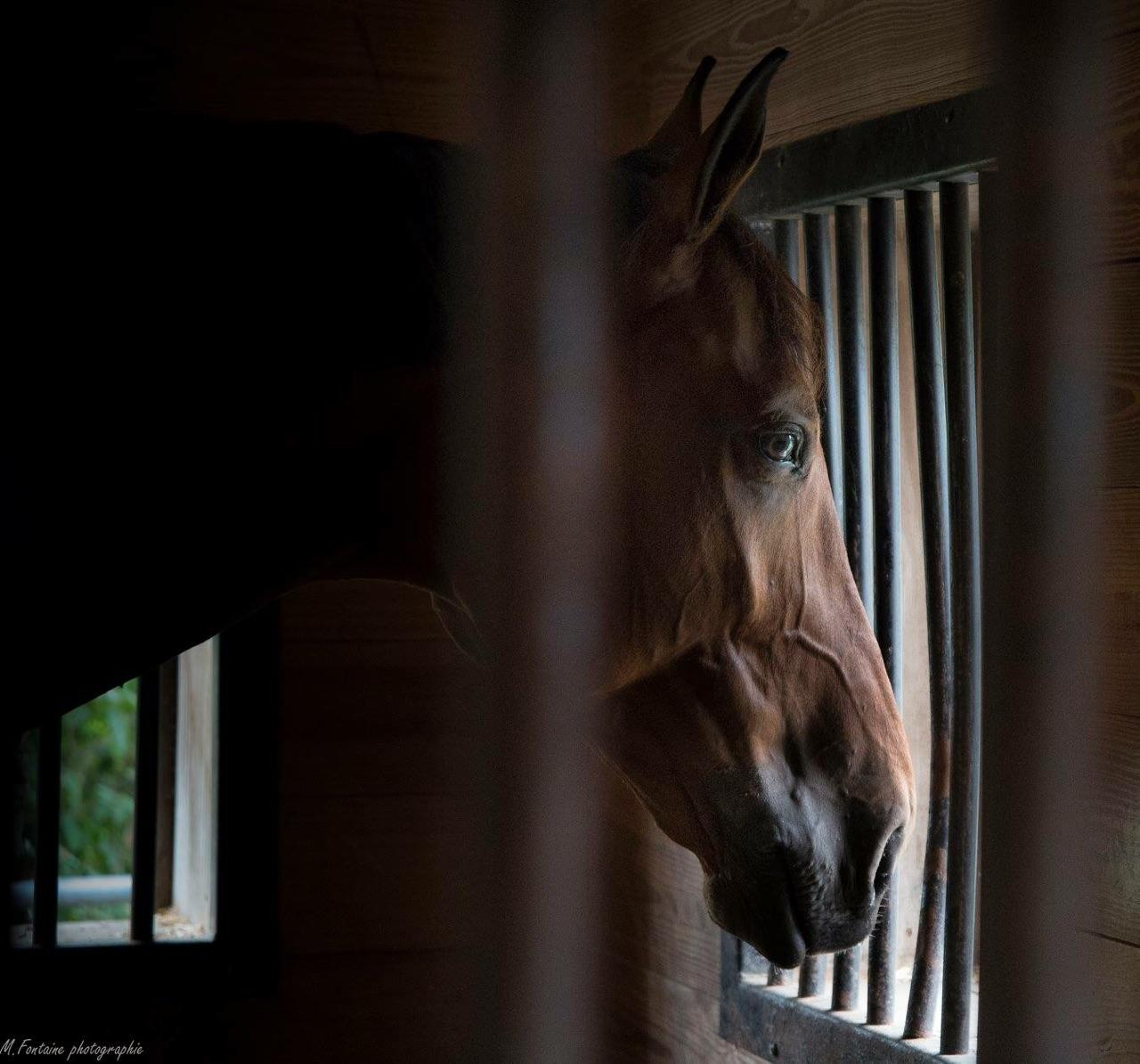 Brown Horse looking out window