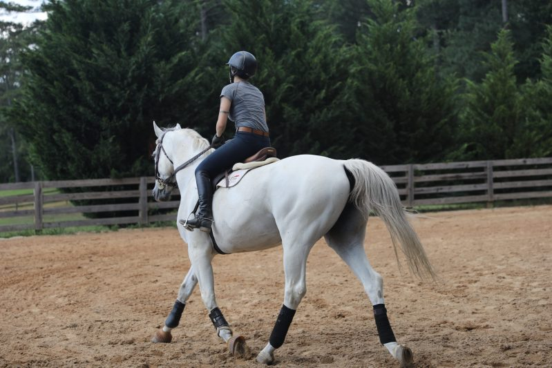 Gray horse Excel Pro Elite Camelina Oil horse supplement with omega 3, 6, and 9.