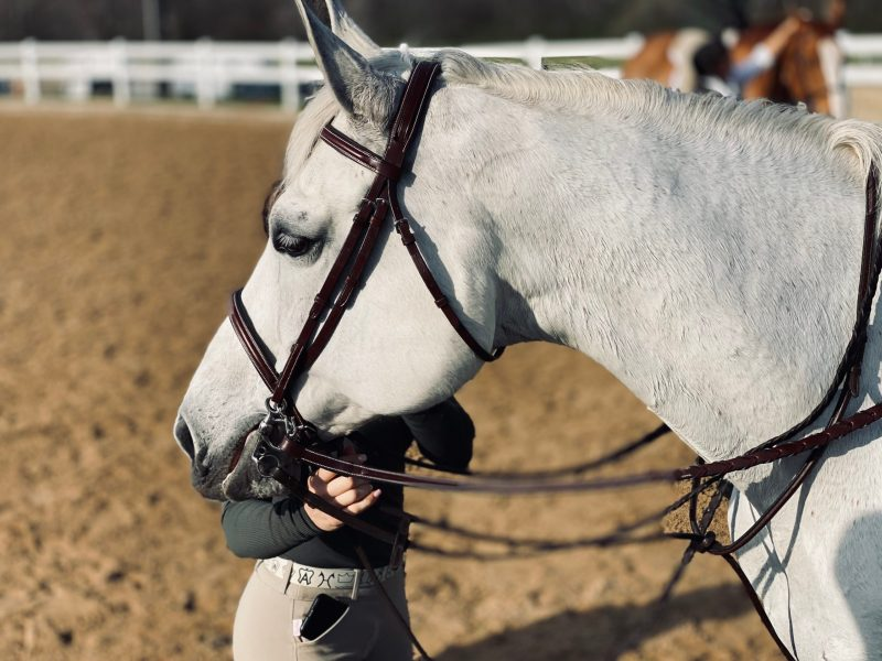 Gray Horse at Horse Show with Groom