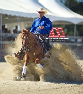 Muehlstaetter Performance Horse sponsored by Excel Supplements