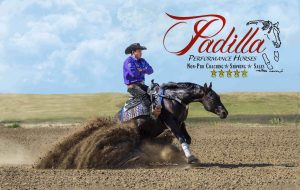Padilla Performance Horse sponsored by Excel Supplements