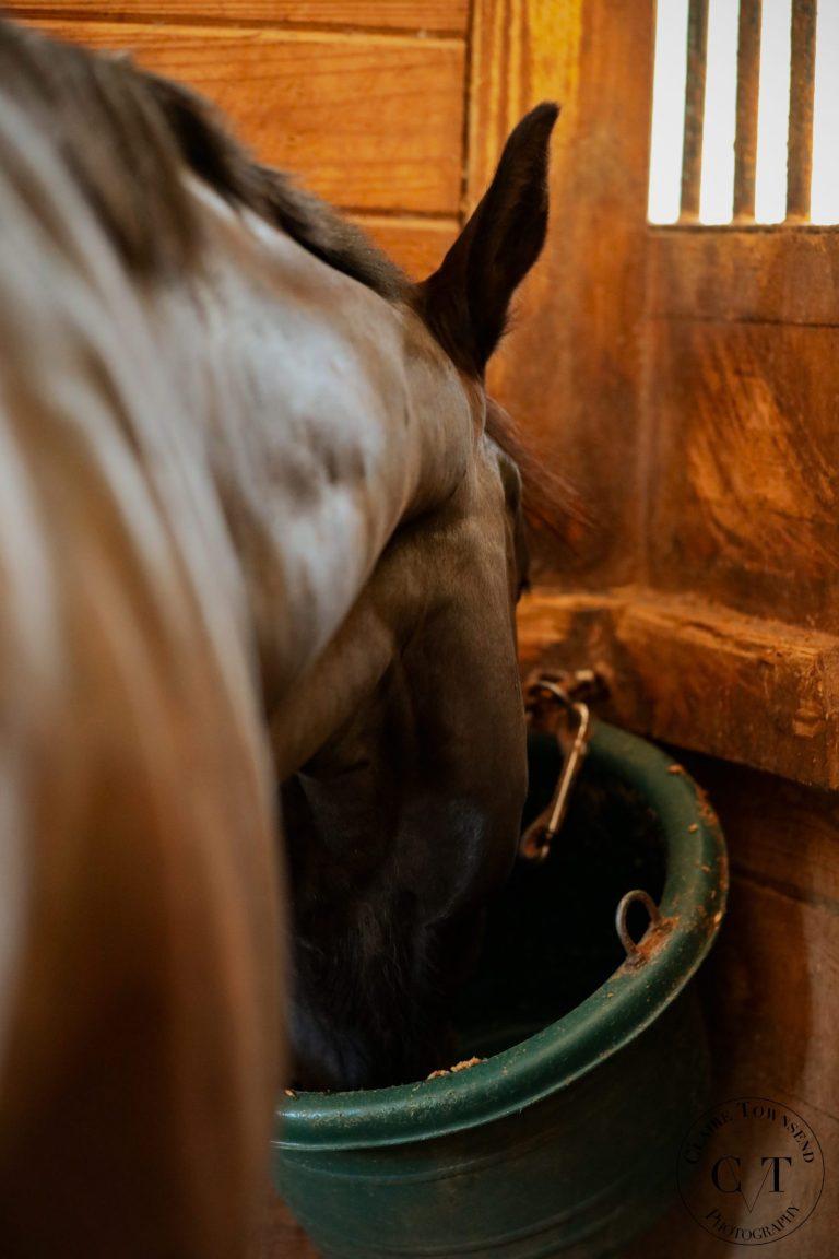 Sale Horse Eating ExcelEQ ProElite