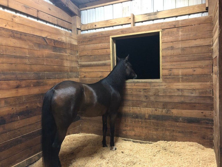 what to do if your horse has colic