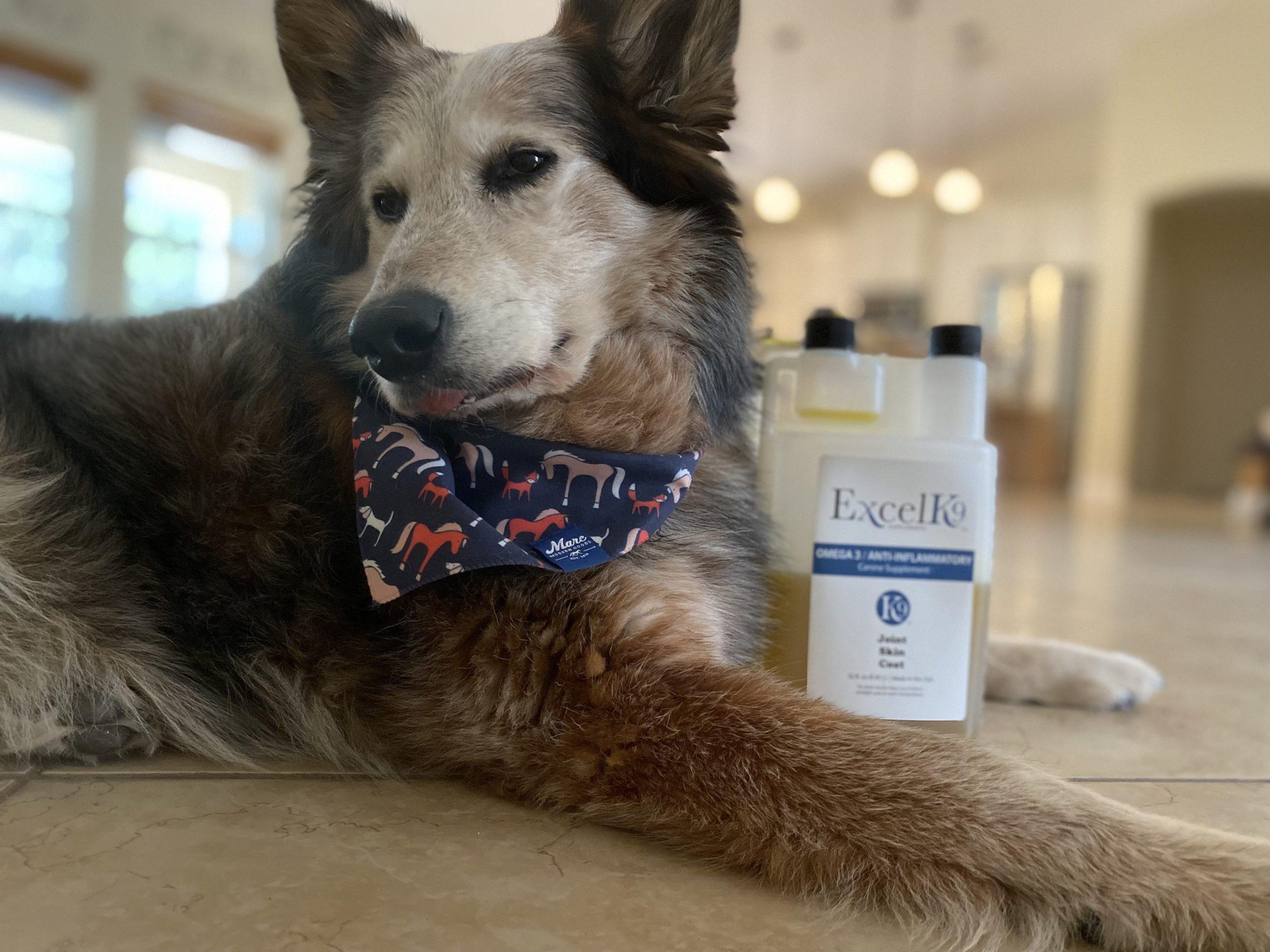 Dog Arthritis Treatment