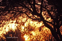 Arizona Sunrise 21553 Copyright Shelagh Donnelly