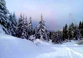 Grouse Mtn 2 Copyright Shelagh Donnelly