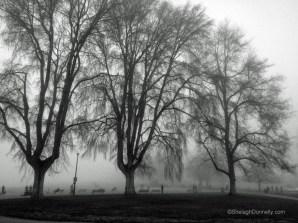Kits Beach Fog 9139 Copyright Shelagh Donnelly