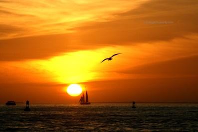 Key West Sunset 3016 Copyright Shelagh Donnelly