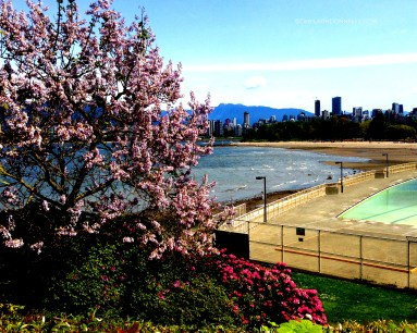 Spring by Kits Pool_7656 Copyright Shelagh Donnelly
