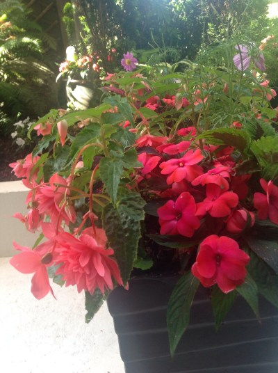 Summer 2015 Planters Copyright Shelagh Donnelly