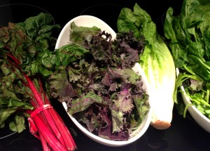 Chard, Kale, Romaine, Spinach Copyright Shelagh Donnelly