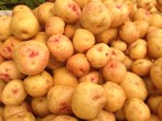 Potatoes 1173 Copyright Shelagh Donnelly