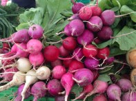BC Radishes 1455 Copyright Shelagh Donnelly