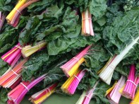 Swiss Chard 1456 Copyright Shelagh Donnelly