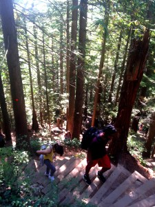 Grouse Grind 5310 Copyright Shelagh Donnelly