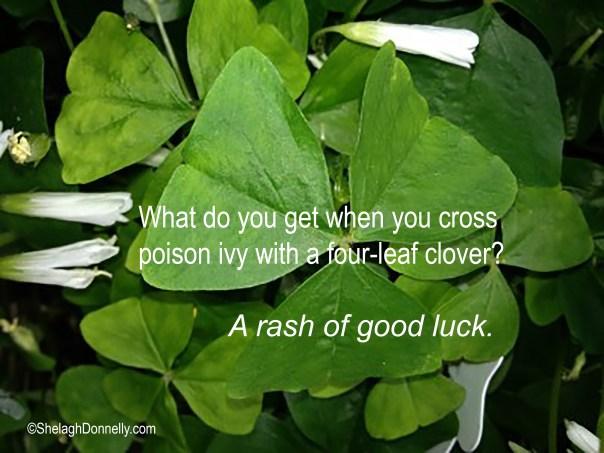Shamrocks and Luck