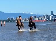 Horses-Drifter-Mara-Spanish-Banks-202106-18029-copyright-Shelagh-Donnelly