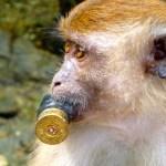 Hardcore Monkey