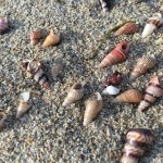 Seashells @ Merimbula Beach