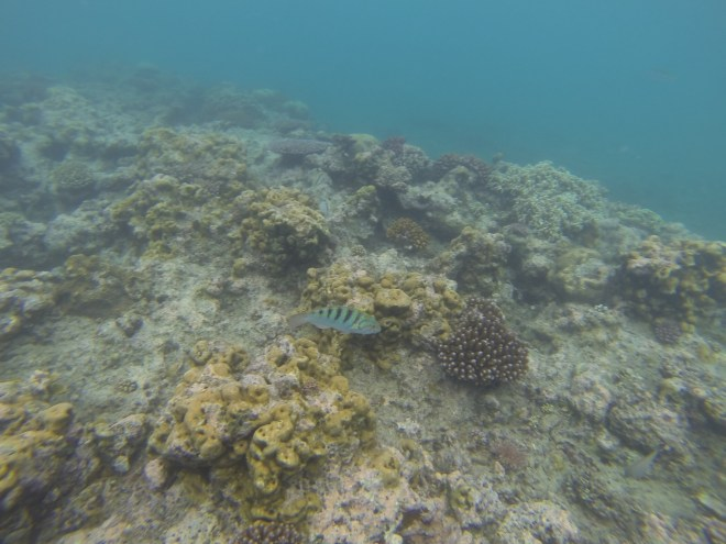 Reef @ Hideaway Island