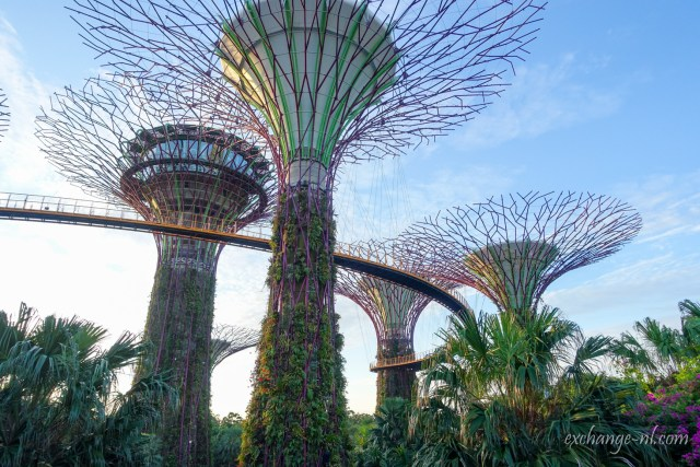 新加坡濱海灣花園超級樹 Supertree Grove, Gardens by the Bay, Singapore