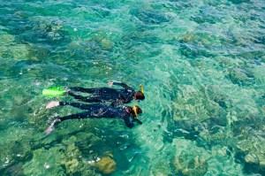 Snorkelers, Great Barrier Reef., Australia