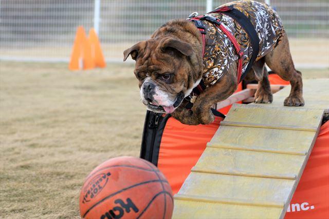basketball015