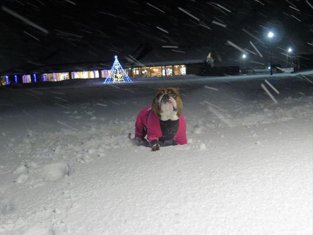 night-snow003