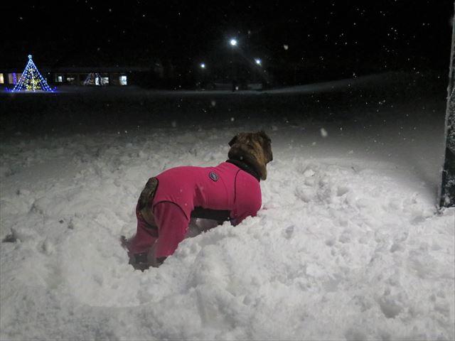 night-snow008