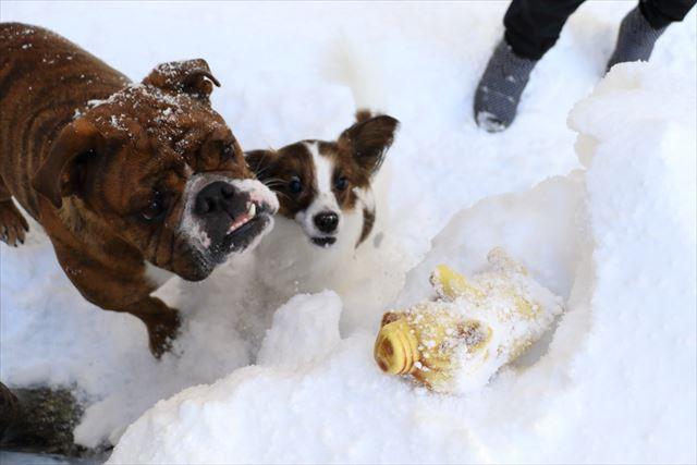 snow-dogrun020