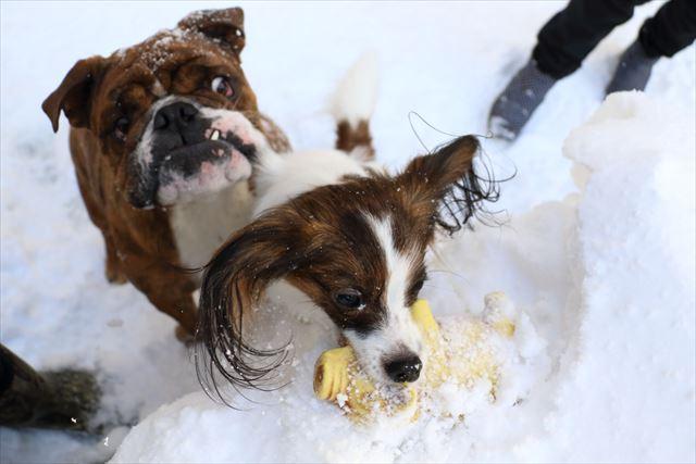 snow-dogrun021