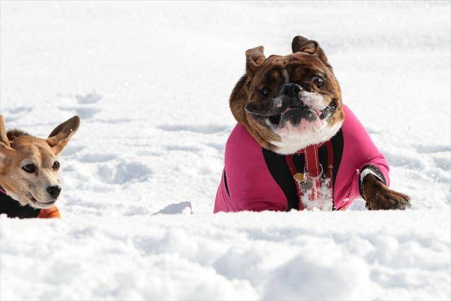 snow-dogrun034